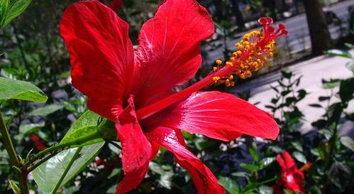 floraviajesbaratosmalaga